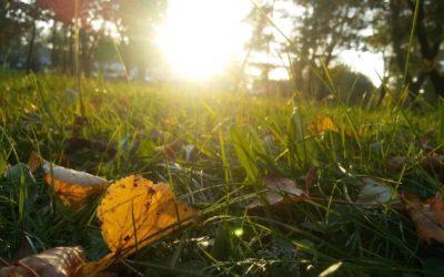 Ayurvedic, Holistic Seasonal Allergy Management